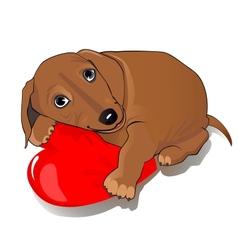 Dachshund dog heart vector