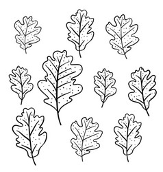 Set of oak leaves isolated on white background vector