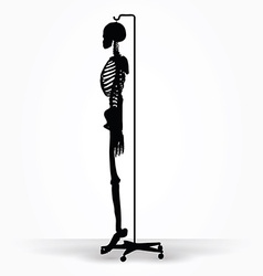 Skeleton silhouette in default pose vector