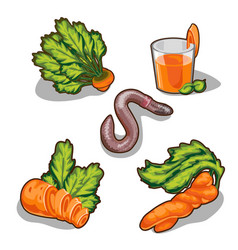 carrot set five elements on white background vector image vector image