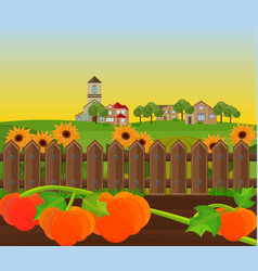 pumpkin harvest garden background vector image vector image