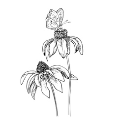 Romantic background with three echinaceas vector