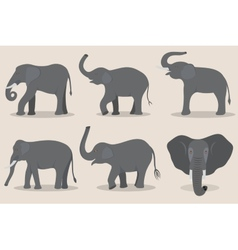 Gray elephant set vector image