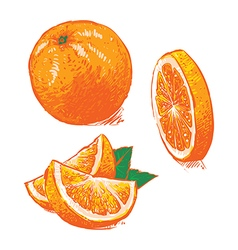 Collection of fresh ripe oranges clip art vector