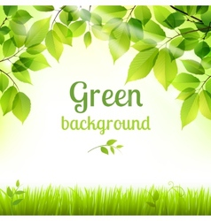 Natural green fresh foliage background vector
