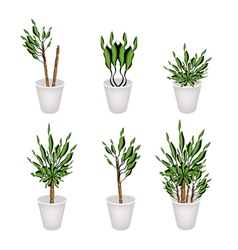 Yucca tree or dracaena plant in a flower pot vector
