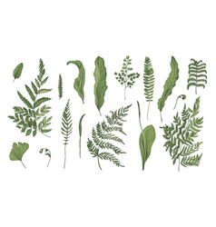 Fern realistic collection hand drawn sprouts vector
