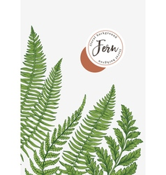 background with leaves of fern vector image