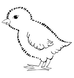 little chick drawing by hand vector image vector image