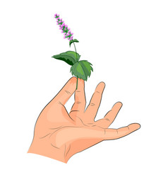 peppermint leaf in the hand vector image vector image