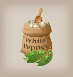 White pepper corn in the bag vector