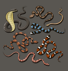 hand drawn snake set vector image
