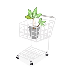 Dieffenbachia Picta Marianne Plant vector image