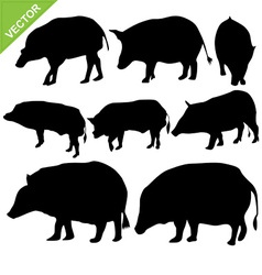 Boar silhouettes vector image vector image