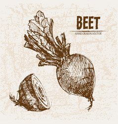 digital detailed line art beet vector image vector image