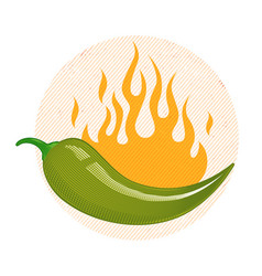 green chili pepper in fire vector image