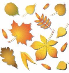 variety of leaves vector image