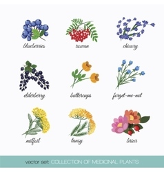 Collection of medicinal plants 5 vector
