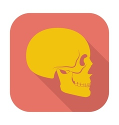 Anotomy skull vector image
