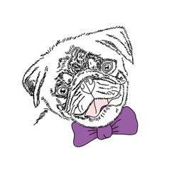 Dog with violet bow cute pug portrait vector