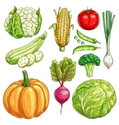 Farm vegetables sketch isolated icons set vector image