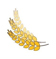 wheat branches icon image design vector image