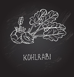 Hand drawn kohlrabi vector