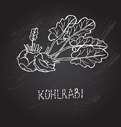 Hand drawn kohlrabi vector
