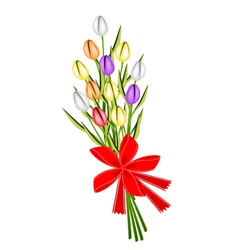 Beautiful fresh tulip bouquet with red ribbon vector