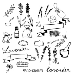 Hand drawn lavander set vector
