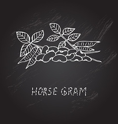 Hand drawn horse gram vector