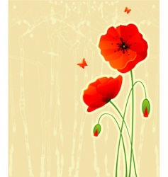 poppy red vector image