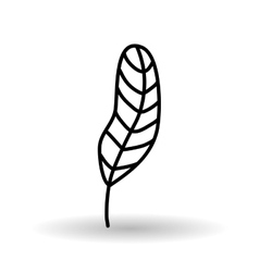 Feather icon design vector