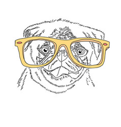 Dog with yellow glasses cute pug portrait vector