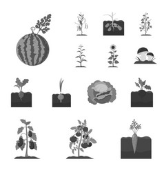 Plant vegetable monochrome icons in set vector