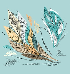 Feather coupon vector