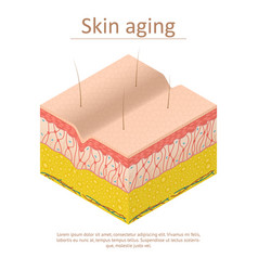 Skin aging card poster isometric view vector