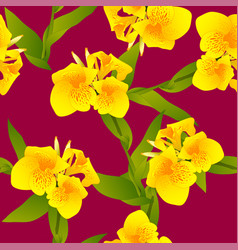 Yellow canna indica - canna lily indian shot on vector