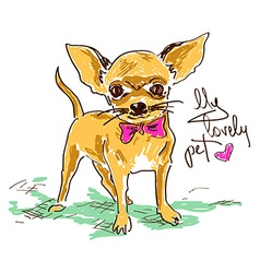 Little cute chihuahua dog vector