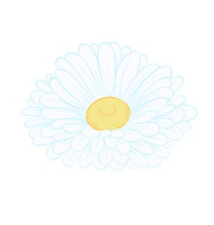 Daisy flower isolated on white vector