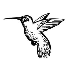 Colibri vector