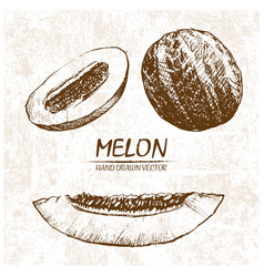 Digital detailed melon hand drawn vector