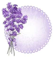 Lavenders vector