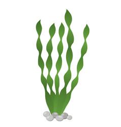 Seaweed - healthy spirulina green algae vector