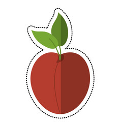 cartoon apricot fruit nutrition icon vector image vector image