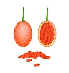 Fresh ripe teasel gourds on white background vector
