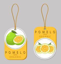 The green pomelo vector