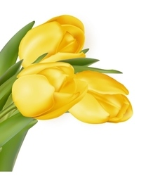 Yellow flowers isolated on white eps 10 vector