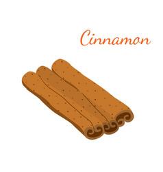 cinnamon cartoon flat style vector image vector image