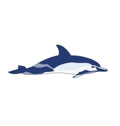 Dolphin on a white background vector
